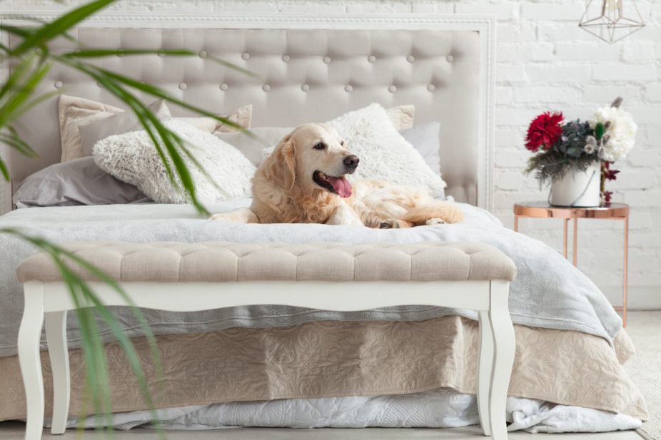 Pet Friendly Home Ideas in Adani Ahmedabad